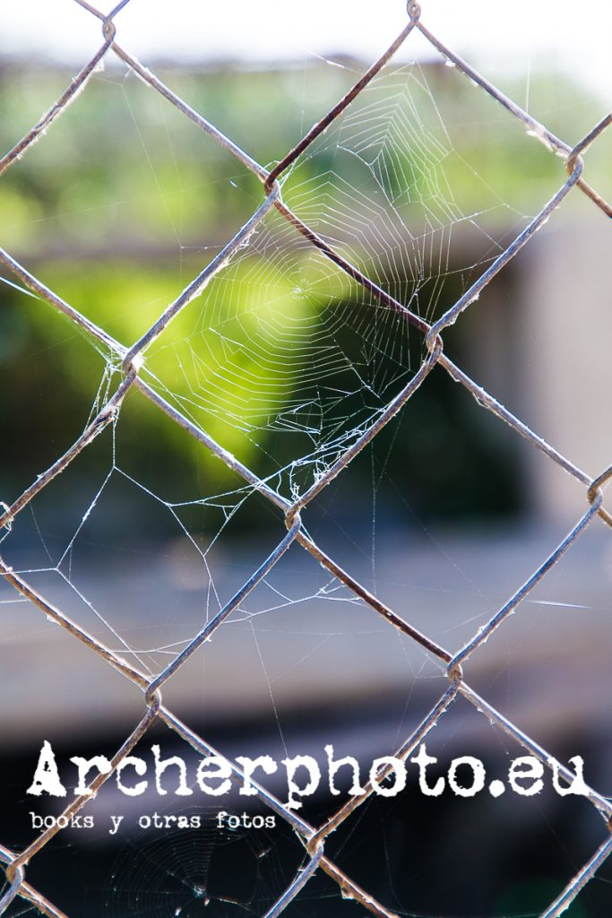 tela de araña por Archerphoto, fotógrafo profesional