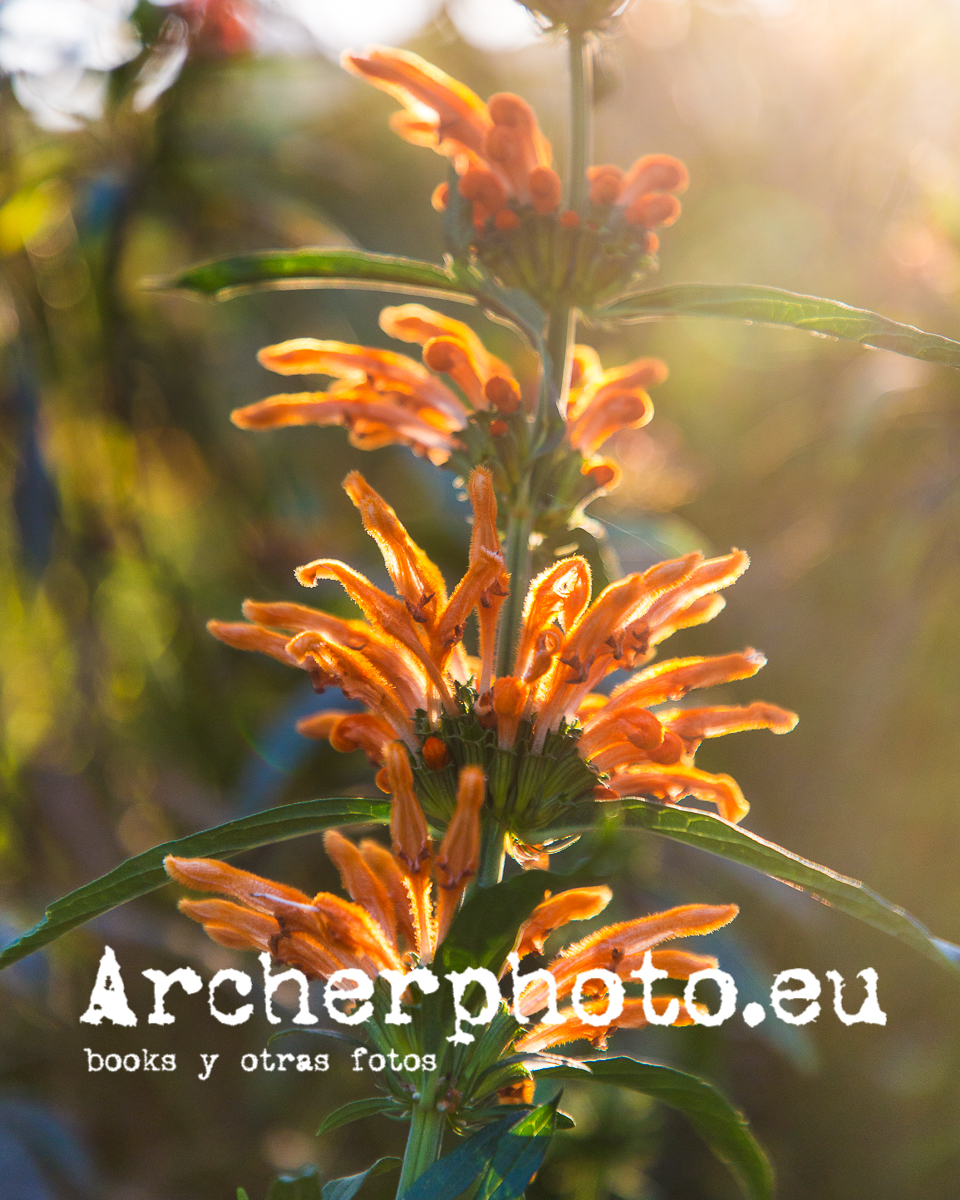 Interludio con flor por Archerphoto fotografos Valencia.