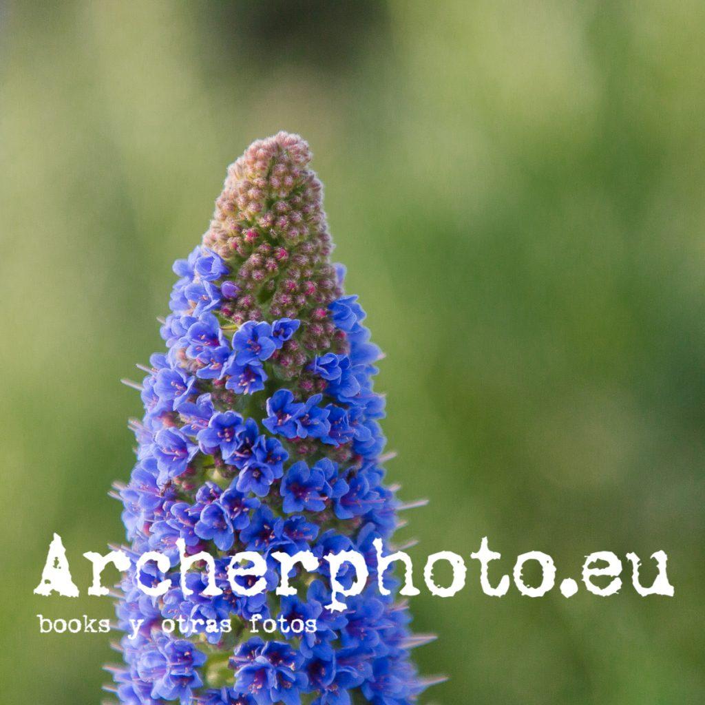 Interludio con flores (2)