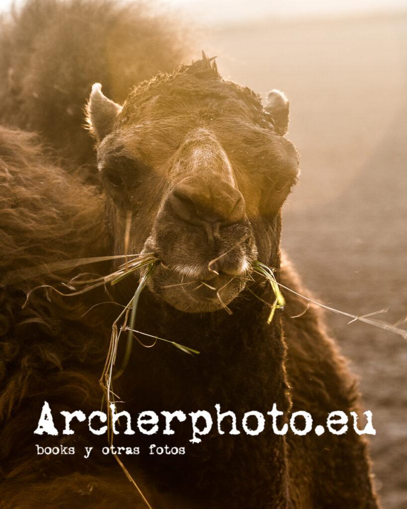 Interludio con dromedario por Archerphoto, fotógrafo en Valencia